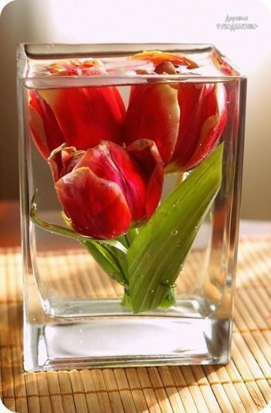Как сохранить цветы при помощи глицерина / Рукоделие