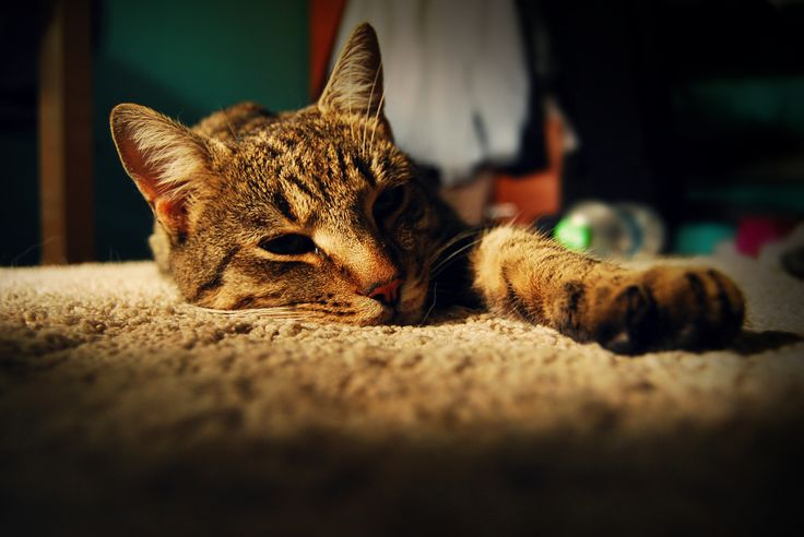 Mornin' cat
