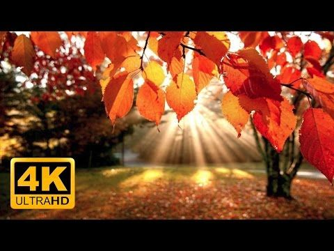 4K Autumn Forest & Relaxing Piano Music - Beautifull Fall Leaf Colors in 4K UHD - 2 Hours - YouTube