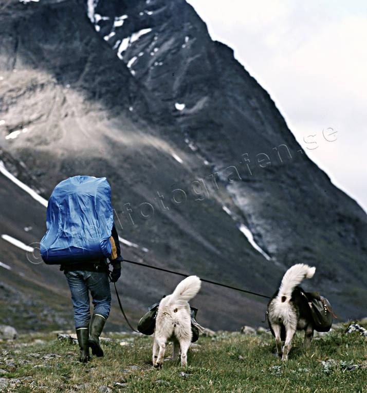 Alpine hiking with dog 1989. Kebnekaise Lappland Sweden   photographer: Wille Carlsson