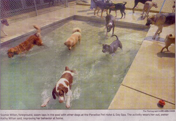 Pet pool can rover come over lodge pinterest dog cat for Dog kennels los angeles