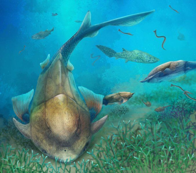 Life reconstruction of Qilinyu along with Guiyu and Entelognathus in Silurian waters. Credit: Dinghua Yang  Early fossil fish from China shows where our jaws came from -- ScienceDaily