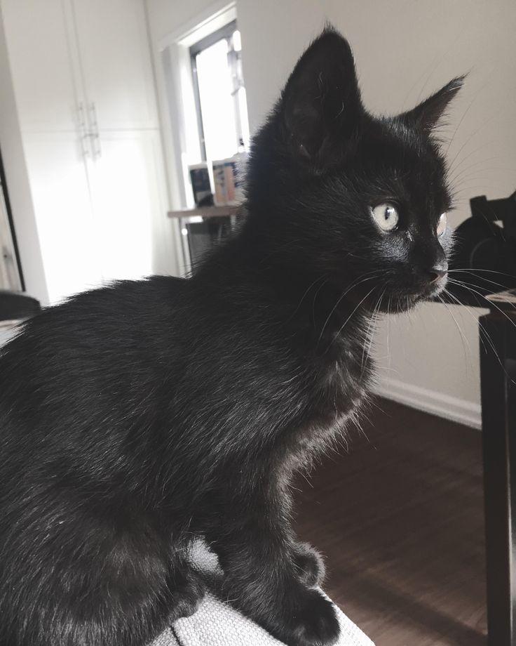 Pablo lernt sein neues Zuhause kennen … Hallo Leute. Bist du #cat …   – Katzen