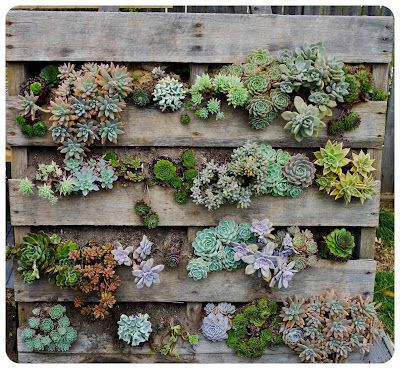 Best 25 Succulent wall ideas on Pinterest Succulent wall