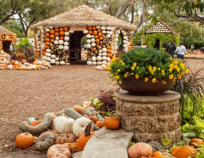 Autumn at the Arboretum features more than 90,000 pumpkins, squash, and gourds, along with 4,500 Chrysanthemums and 150,000 additional fall-blooming plants.