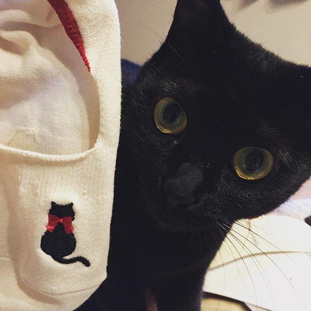 つい買ってしまった靴下さん。 見えないけどシャミセンも赤いリボン付けてます🎀  #猫#黒猫#ねこ#猫部#cat#blackcat#japan#シャミセン#shamisen#保護猫#愛猫#くろねこ#catstagram#ペコねこ部#猫のいる生活 #黒猫グッズ#ついつい買ってしまう