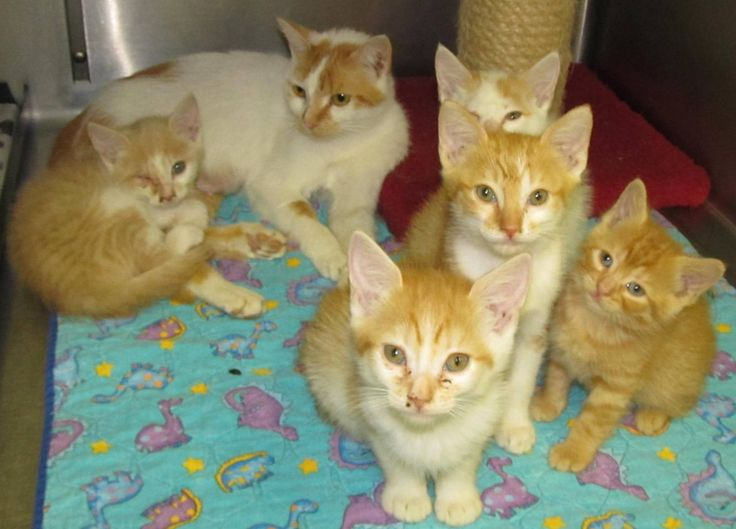 URGENT!! This is a HIGH KILL SHELTER!!Lee County Animal Services NC. Mother Cat with kittens 12473 - 12477