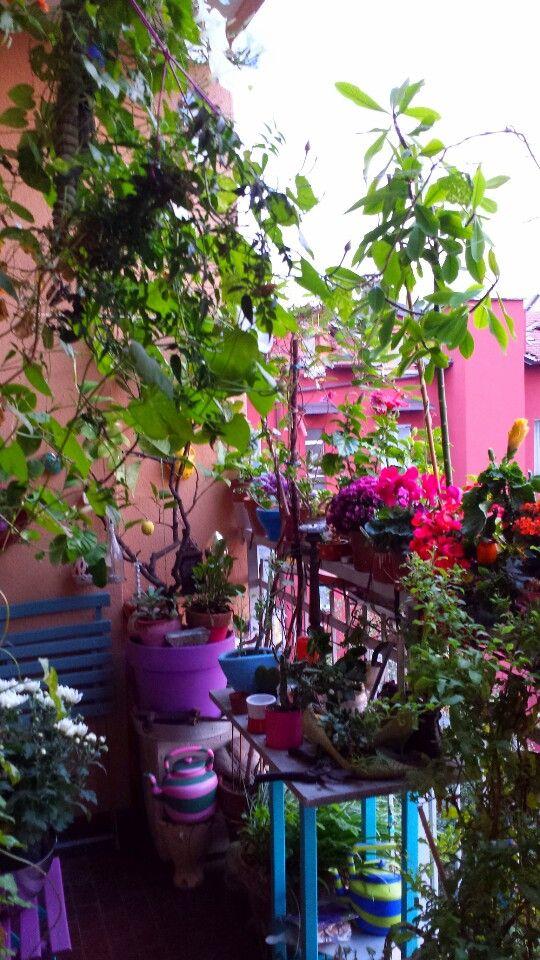 Plus de 1000 idées à propos de Varandas (terraços) sur Pinterest ...