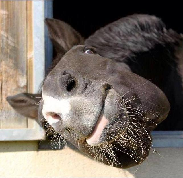 Funny horse! Cute nose and peeking eyes, trying to see you better!