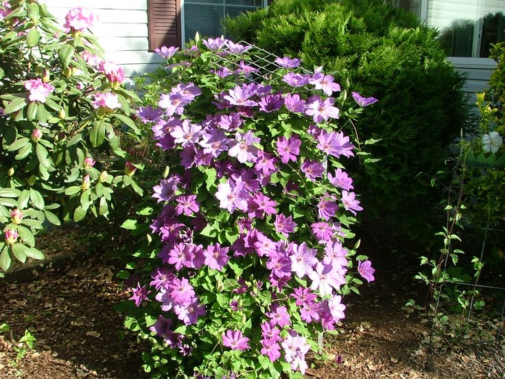 Container gardening ideas pictures landscaping ideas for Perennial container garden designs