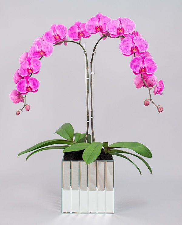 Orchids - perfect holiday gift!