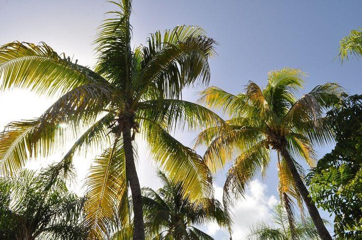 Antilles néerlandaises: à la découverte de cinq îles de rêve