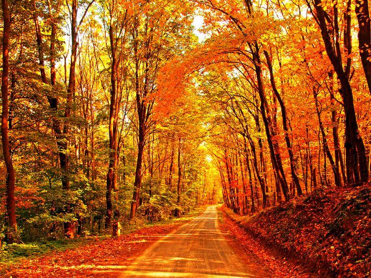 Fall background. | Halloween | Fall wallpaper, Fall ...