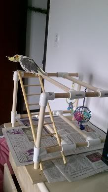 Homemade Portable Gym I want to have something like this for my birds....
