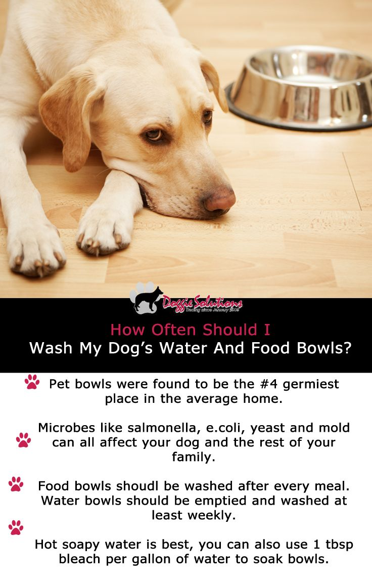how often should i bathe my chihuahua how often should i wash my dog s food and water bowls 9031