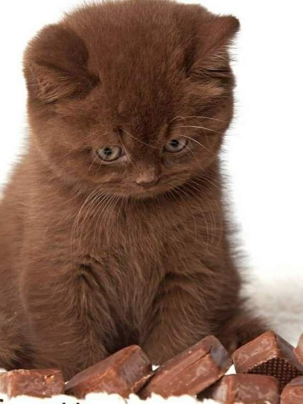 Kit Kat Et Al Candy Bars Chocoholic Pretty Cats Cute Cats