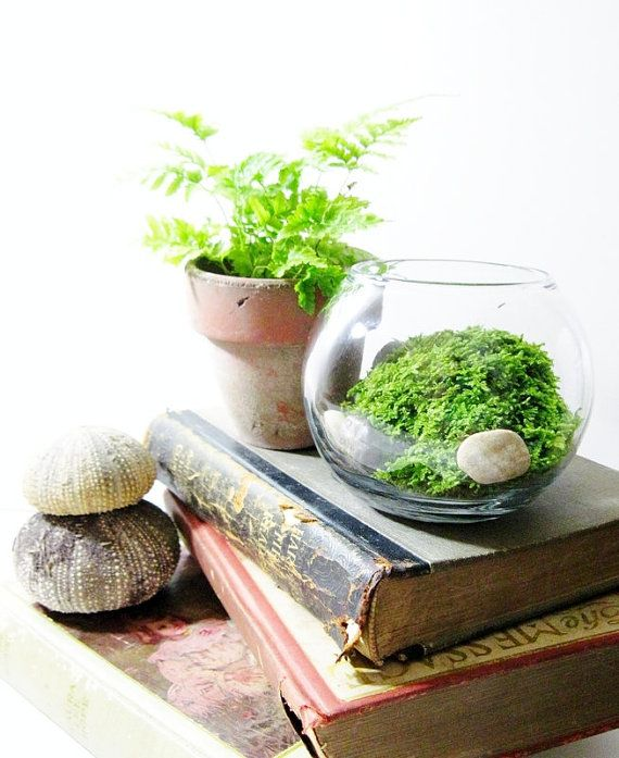 plants for windowless office. live plant office terrarium mini indoor desk by doodlebirdieiu0027m thinking plants for windowless g