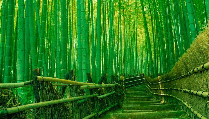 Kyoto_Sagano-Arashiyama.jpg (720×410)