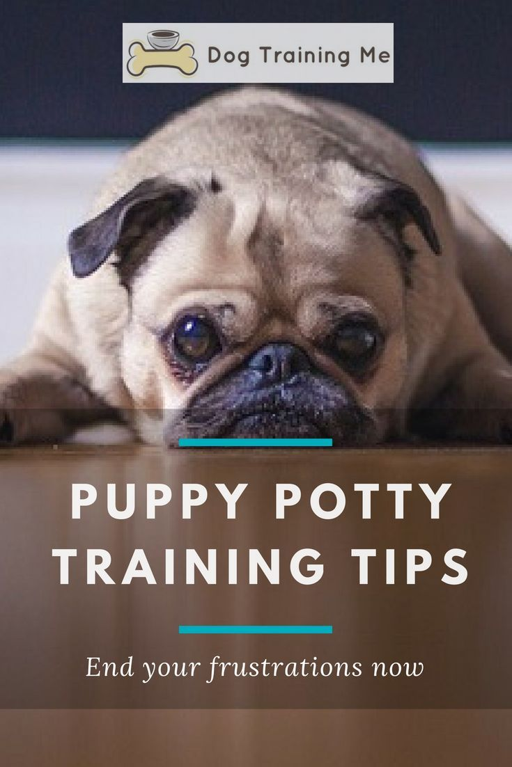 Dog Clicker Training Where To Start With Clicker Training
