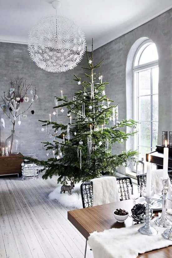 Un albero polare