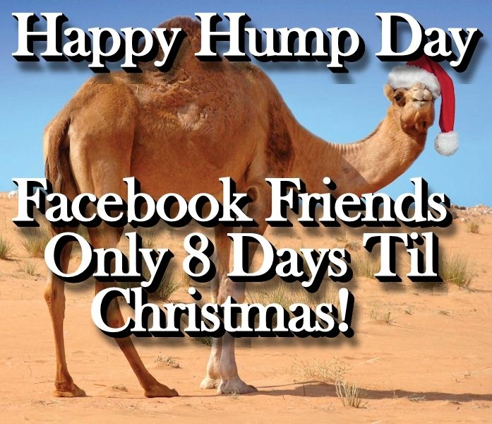 Best Hump Day Quotes: Best 25+ Hump Day Camel Ideas On Pinterest