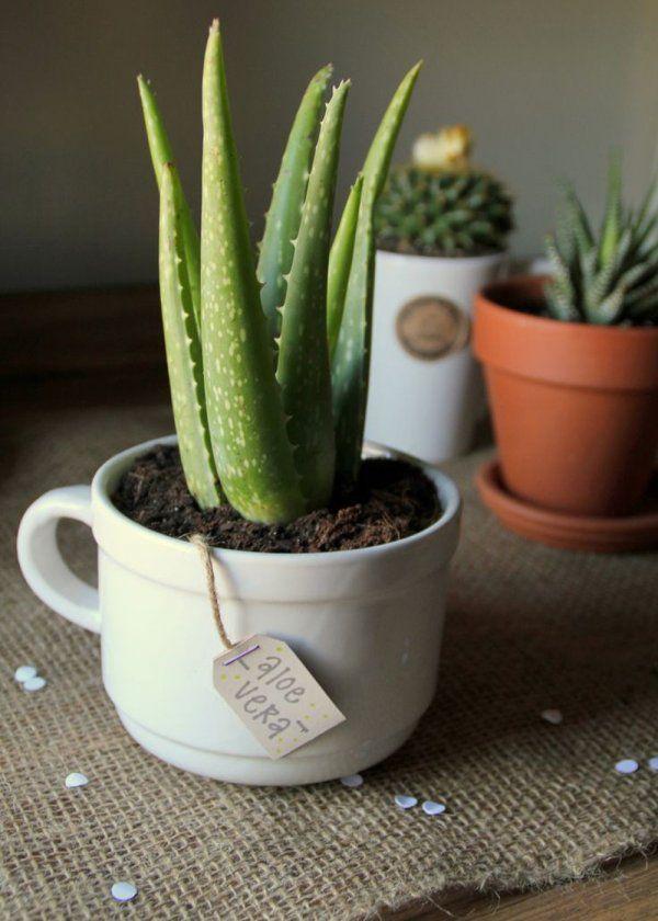 """Des plantes décoratives aux vertus """"bien être""""                              …"""