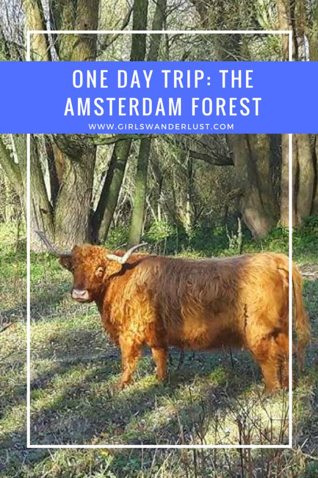 One day trip- The Amsterdam Forest.  Do you want to experience something else than the overcrowded tourist attractions of Amsterdam? Visit the Amsterdam Forest in the Netherlands! #girlswanderlust #wanderlust #travel #traveling #travelling #travel #travelblog #travelinspiration #Amsterdam #Netherlands.png