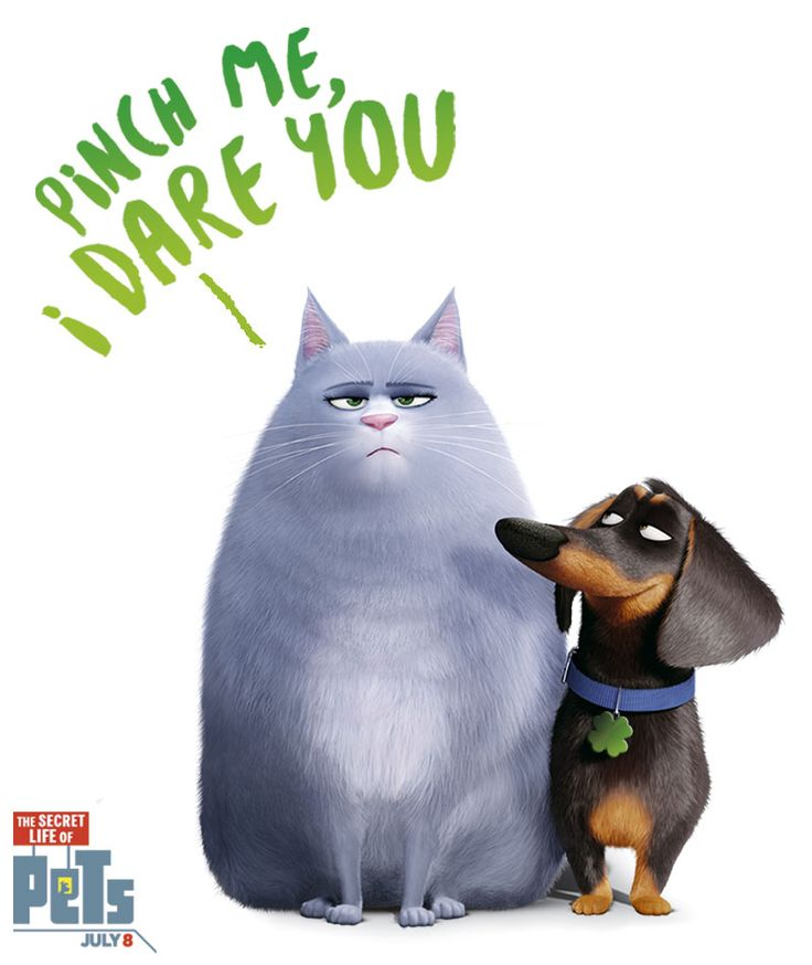 Secret life of pets, Secret life and The secret on Pinterest