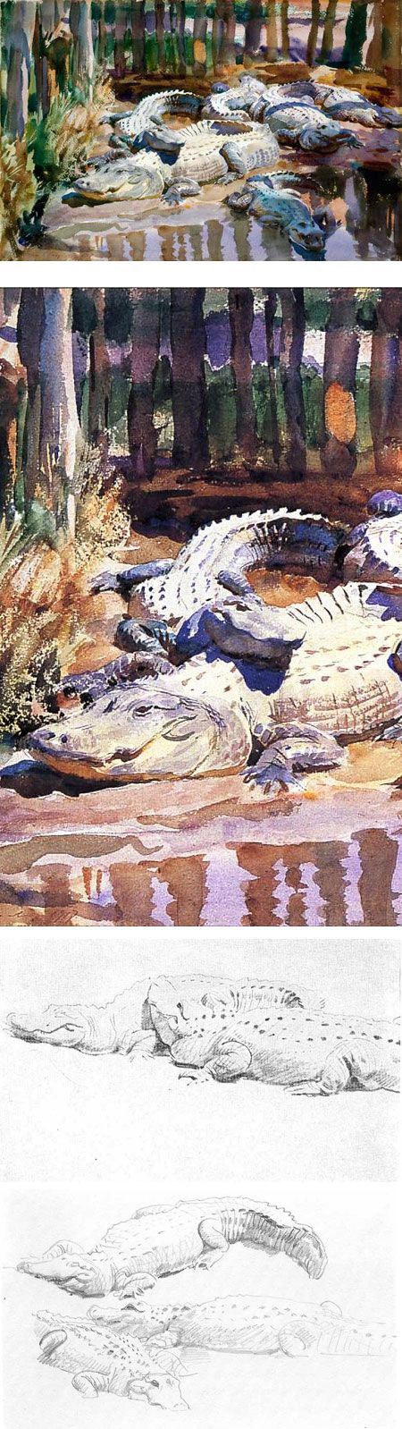 John Singer Sargent's beautiful watercolor of Muddy Alligators, and some related drawings
