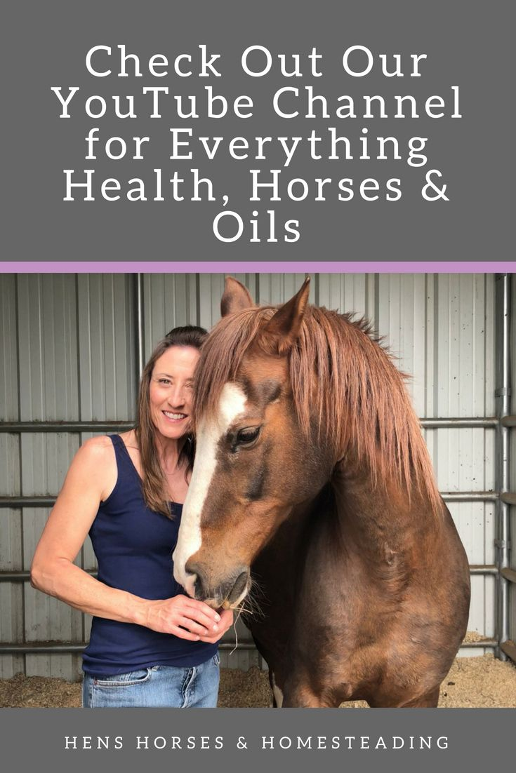 Pin By Jean Harms On Equestrian Horse Health Horse Care Horse Riding Tips