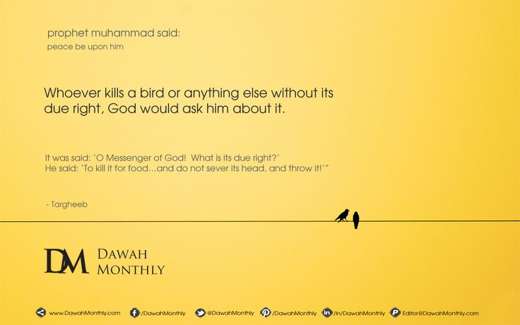 """The Prophet Muhammad (peace be upon him) said:  """"'Whoever kills a bird or anything else without its due right, God would ask him about it.'  It was said: 'O Messenger of God!  What is its due right?'  He said: 'To kill it for food…and do not sever its head, and throw it!'"""" (Targheeb)  Shooting at live pigeons was once an Olympic event and today dove shooting is allowed in many places.  Also, separating nestling birds from their mothers is not allowed in Islam."""