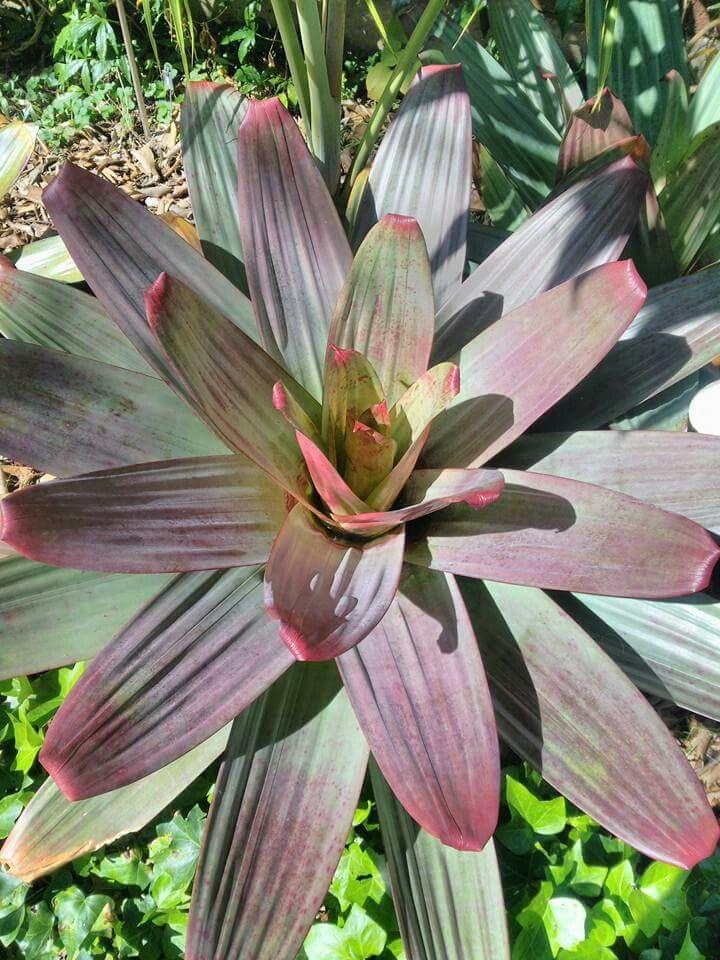 #succulentjunkie | SocialMediaFeed.me | View Latest …