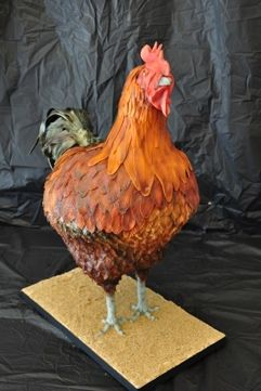Albert the Rooster cake. Created for the Denver County Fair 2012