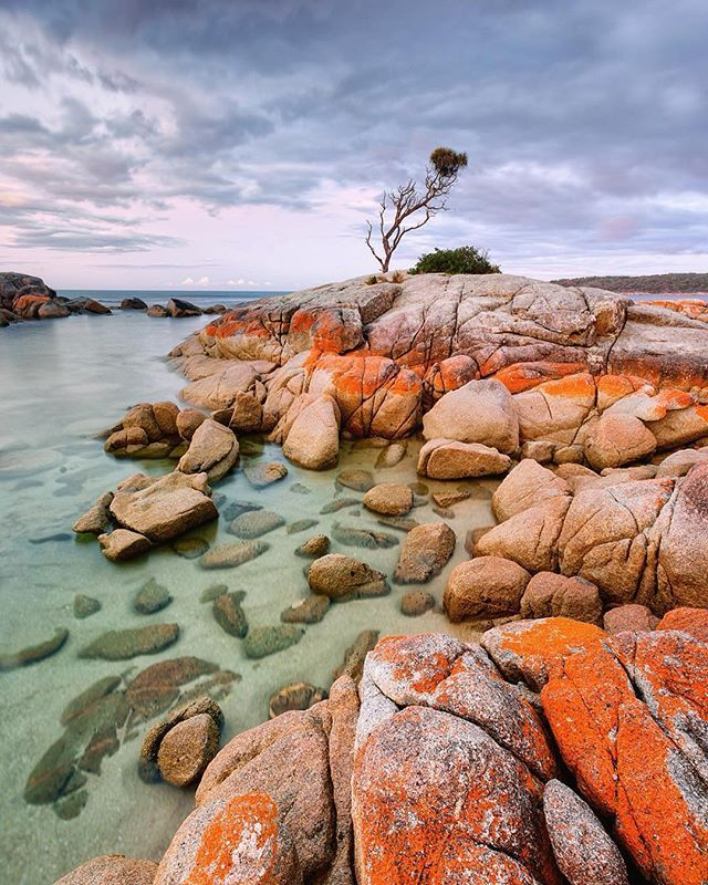 I couldn't visit the Bay Of Fires over Easter break and not shoot that tree  The beautiful Binalong Bay, Tasmania Australia. @eastcoasttasmania