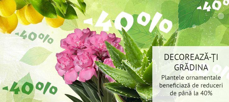 Flori, arbuști, sau liane, toate cu un aspect decorativ atractiv, multicolor și un parfum îmbietor, te așteaptă în catalogul online Grădina Max, făcând parte dintr-o gamă diversificată de soiuri de PLANTE ORNAMENTALE, acum cu 40% REDUCERE!  PROFITĂ DE SUPER-PREȚURI ȘI PLASEAZĂ O COMANDĂ aici> https://gradinamax.ro/promotii/plante-ornamentale-40!