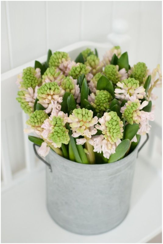 In Winter we love fragrant flowers like hyacinth's and violets.   Fresh cut flowers are our number one touch of every day luxury. x