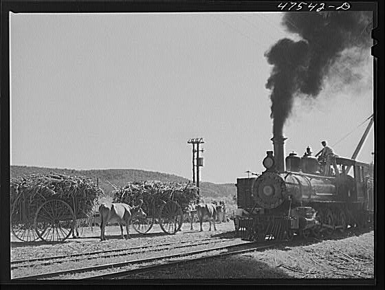 1942 Guanica, Puerto Rico (vicinity). Freight train used in hauling cane to the sugar mills from loading stations
