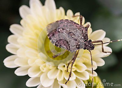 Macro photo of brown insect on flower.