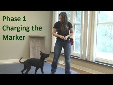 First Thing to Teach a Dog (K9-1.com).  This is the first in a series of excellent dog training videos.