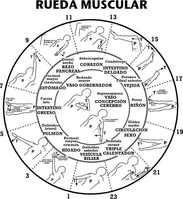 Consultorio Medicina Natural: Kinesiología