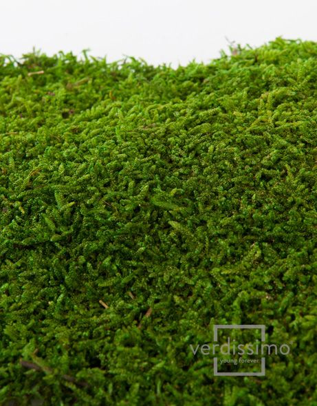 Moss Flat  Inspiration: Moss is an excellent choice for green walls and vertical gardens because it softens the space and creates a more natural atmosphere.  http://www.verdissimo.com/en/productdetail.php?id=34