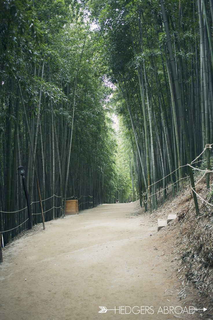 Known for it's bamboo forest and metasequoia-lined road, Damyang is a beautiful little town outside of Gwangju.