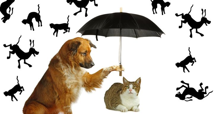 What Does The Expression Raining Cats And Dogs Mean