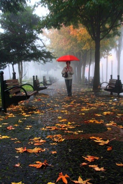 17 best images about autumn rain on pinterest the fog