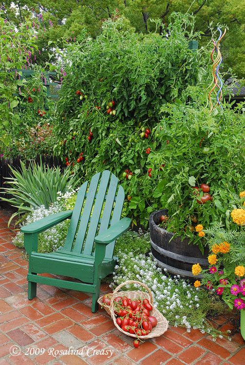 Two large indeterminate tomato plants are trained on sheets of 3″ x 3″ square hog wire. The harvest from the three tomato plants was over a hundred pounds of delicious home-grown, organic tomatoes-worth between $250 to $300 at the market!