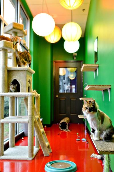 "Catisfaction ""Cat Alley"""