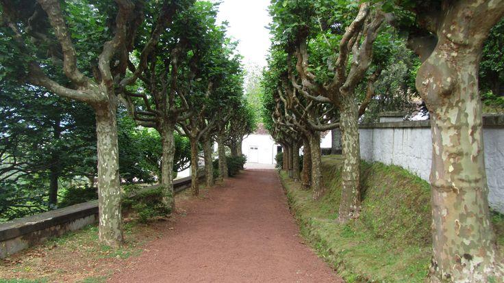path leading to Ponte Formoso Tea Factory - and Plantation. they produce delicious Orange Pekoe - Sao Miguel, Acores - Portugal