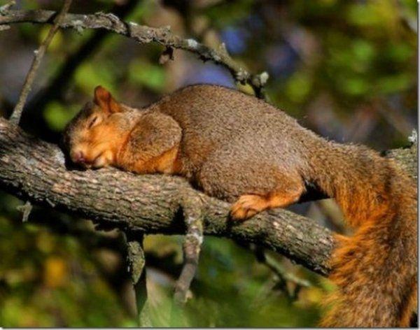 Смешные фото животных. Спящие животные