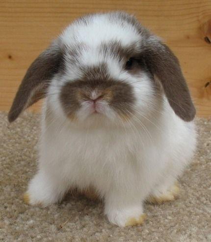 Bunnies with floppy ears