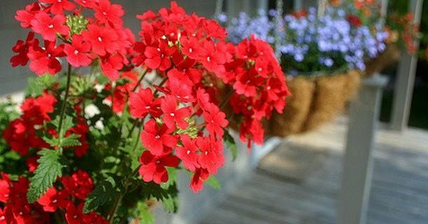 Score Hanging Flower Baskets Just $5.00/Each At Lowe's!